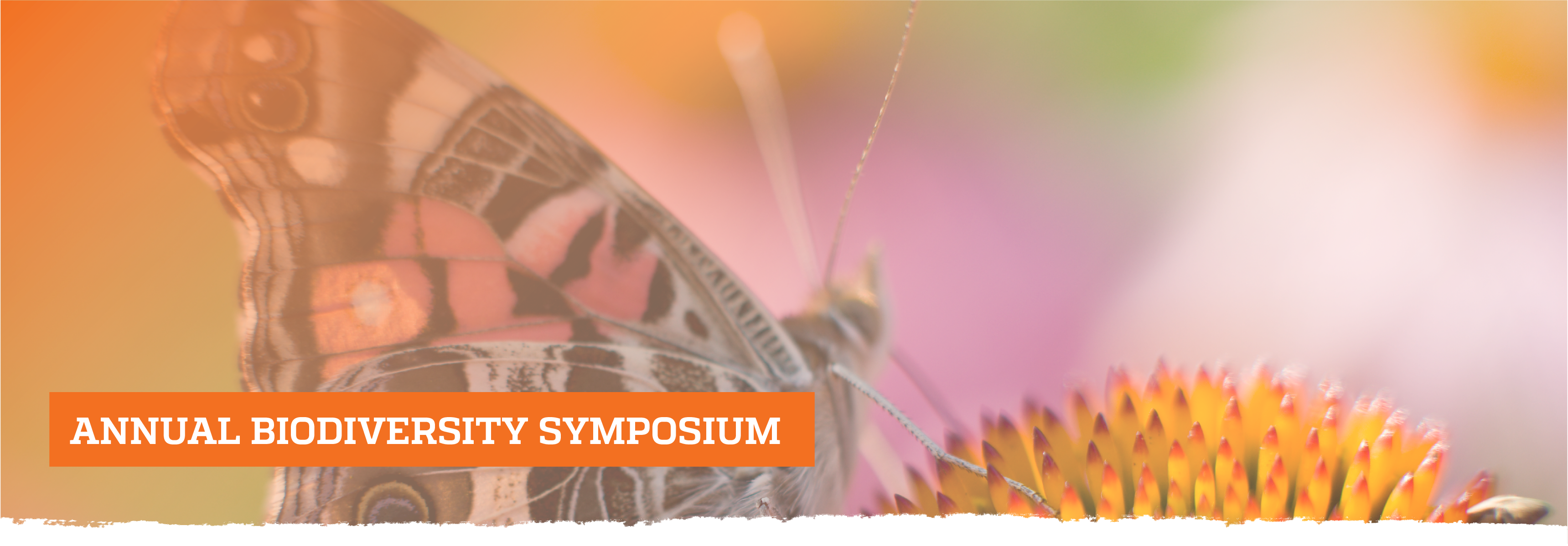 Butterfly on flower; Annual Biodiversity Symposium